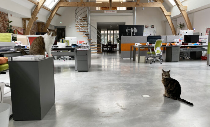 AssistiveWare's office cats Starsky and Hutch