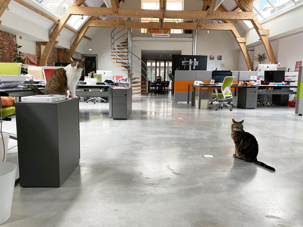 Starsky y Hutch, los gatos de AssistiveWare