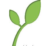 Rama de árbol con hojas